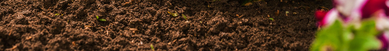 sustrato universal para plantas