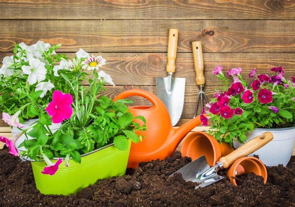 Sustrato universal para plantas materiales de jardiner a - Materiales de jardineria ...